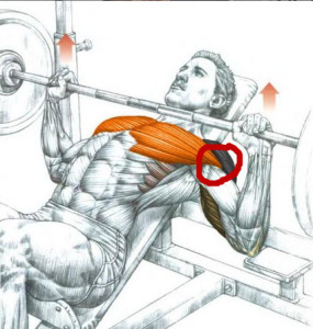 Incline-press-pec-tendon