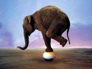 balance slon