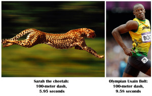 Cheetah vs Usain.news.nationalgeographic.com