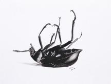 mrtvý brouk