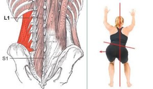 Gluteus vs Quadratus