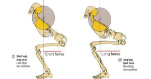 dřep a femur